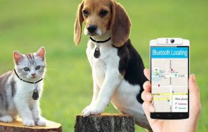 Are You Looking for a Modern Way to Protect Your Furry Companion?