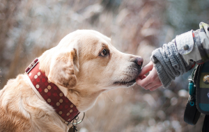 How Can Pet Insurance Help Your Pets?