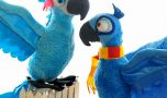 How to locate Angry Wild birds Plush Toys